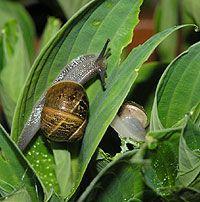 How To Kill Snails and Slugs