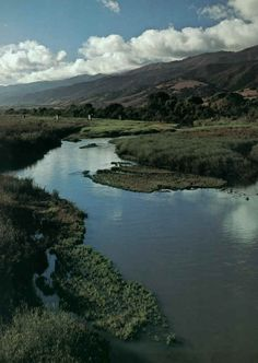 On the one side of the river the golden foothill slopes curve up to the strong and rocky Gabilan mountains, but on the valley side of the water is lined with trees- Salinas River, English Projects, Gcse English, East Of Eden, Cali Girl, Visual Aids, Of Mice And Men, Dry Leaf, Man Set