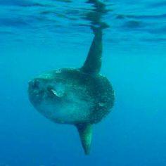 ¡Buenos días! ¡Descubre el fondo submarino en un entorno único el Parc Natural de Cap de Creus! En Roses puedes hacer submersiones todo el año. #aRoses #inCostaBrava #diving #sea #mer #mar #lovely #charmant