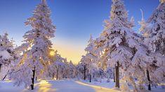 ein wald mit weißen bäumen mit schnee im sonnenuntergang - ein blauer himmel und sonne - romantische winterbilder