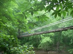 Red River Suspension Bridge, Red River Gorge, Sheltowee Trace Trail