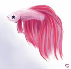 Haha, you guys knew what I was doing before I did! Here's a party betta. to go with the rare betta. Fish Drawings, Cute Animal Drawings, Cartoon Drawings, Sea Drawing, Pastel Drawing, Drawn Fish, Cartoon Fish, Oil Pastel Art, Beta Fish