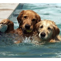 These dogs are definitely using the buddy system!