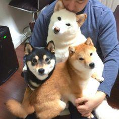 urajirocoat: http://s.ameblo.jp/shibainulover/