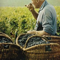 A Burgundian Grape Picker Washes Down His Sandwich With Wine