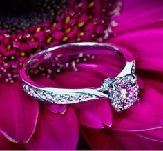 Legato Sleek Line Pave Diamond Engagement Ring Diamond Rings, Diamond Engagement Rings, Diamond Wedding Sets, Beautiful Wedding Rings, Dream Wedding, Perfect Wedding, Purple Wedding, Fall Wedding, Pretty Rings