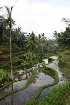 Bali, we honeymooned here. Want to go back sometime.