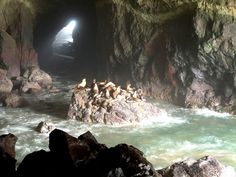 Sea Lion Caves, 11 miles north of Florence Oregon on scenic Hwy 101