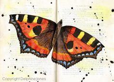 Tortoiseshell butterfly by Delphine Jones