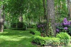 Znalezione obrazy dla zapytania ogród w lesie