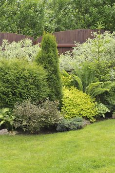 38 Clever Backyard Shrub Garden Ideas Shrub gardens have a tendency to be very full. If you gather a number of shrubs and let them grow your shrub garden will be a very interesting mix of textures and colors. Garden Shrubs, Shade Garden, Lawn And Garden, Garden Plants, Backyard Shade, Fruit Garden, Privacy Landscaping, Garden Landscaping, Landscaping Ideas