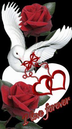 Princesa Azteca - Googl e+ Dove Images, Love Heart Images, I Love You Images, Love You Gif, Beautiful Love Pictures, Romantic Pictures, Beautiful Gif, Beautiful Birds, Butterfly Wallpaper