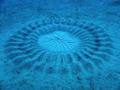 As 15 coisas mais chocantes encontradas nas profundezas do oceano