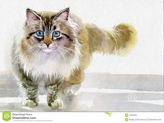 Watercolor Animal Collection: Cat Stock Photography - Image: 33209032