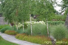 brzozy, Morning Light i Red baron Contemporary Garden Design, Landscape Design, Modern Landscaping, Yard Landscaping, Garden Trees, Garden Plants, Baumgarten, Rogers Gardens, Natural Garden