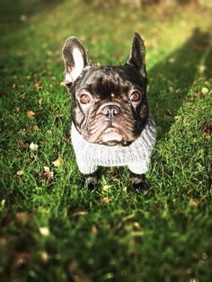 Chien - French Bulldog - Glasgow  on www.yummypets.com  Dogs, pets, animals, pooch, puppy, pup, frenchie, french bully, cute Yummypets