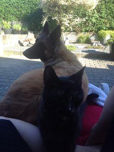 Love animals!  Best friends in the World!