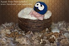 Cookie Monster and Cookies Newborn Infant Pose Photography www.facebook.com/agapestop