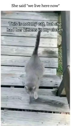 Baby Animals Pictures, Cute Animal Pictures, Animals And Pets, Super Cute Animals, Cute Little Animals, Funny Animal Jokes, Funny Animal Videos, Funny Cute Cats, Cute Funny Animals