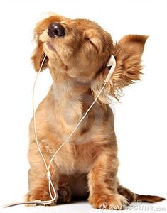 does these puppy and headphone pics ever get old?