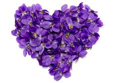 Sweet Violet Flowers are Edible and A True Flower of Love