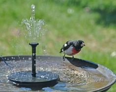 Moving water attracts more birds!  Solar-powered fountain pictured.