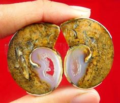 50  Cts.  100% Natural Fossil Snail Druzy Agate Pair Cabochon  Gemstone AW7
