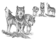 Wolf Tattoo Idea, maybe by Hype94