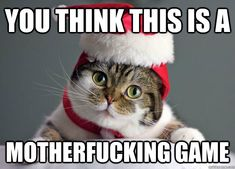 When cats, Christmas and swearing collide. Perfection.  #cats #christmas #swearing #meme