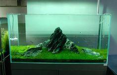 Aquarium einrichten – unwiderstehliche Deko Idee für Ihr Interieur |  Minimalisti.com