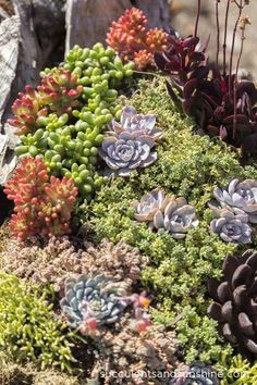 Succulent arrangement in driftwood at Waterwise Botanicals - Succulents and Sunshine