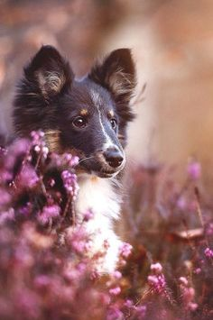 wavemotions:A new star is born - Zelda by Anne Geier Beautiful Dogs, Animals Beautiful, Cute Puppies, Dogs And Puppies, Pet Dogs, Dog Cat, Doggies, Animals And Pets, Cute Animals