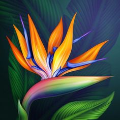 Birds of Paradise flower Acrylic painting Summer Pictures, Flower Pictures, Birds Of Paradise Flower, Bird Of Paradise Tattoo, Acrylic Wall Art, Tropical Art, Arte Floral, Exotic Flowers, Tropical Flowers