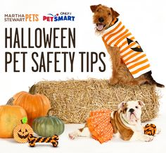 Be prepared for the arrival of autumn and follow these guidelines for your pet's safety this fall and Halloween season. #marthastewartpets #petsmart #petcare #pettips #halloween #petsafety