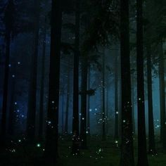 Twitter - Earth Pics ‏; Firefly Forest, England.