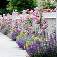 Flowers in front and through a white picket fence. Garden Spaces - traditional - landscape - other metro - dabah landscape designs. White Picket Fence, White Fence, Picket Fences, Picket Fence Garden, Farm Fence, Black Fence, Cedar Fence, Bamboo Fence, Vinyl Picket Fence