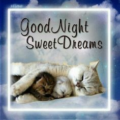 Sharing some cute and nice good night quotes, images, wishes, texts and wallpapers. WIshing a good night and sweet dreams wish to your loved one! Good Night Meme, Good Night Cat, Cute Good Night, Good Night Friends, Night Gif, Good Night Messages, Good Night Wishes, Good Night Sweet Dreams, Good Night Sleep