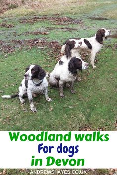 Andrewshayes Holiday Park has some Perfect Beautiful Relaxing East Devon Dog Pet Friendly WALKS for you all to go on. Enjoy the stunning Devon Countryside. Dog Friendly Holidays, South West Coast Path, Lyme Regis, Best Pubs, Great Walks, Beach Walk, Dog Walking, Dog Friends, Devon