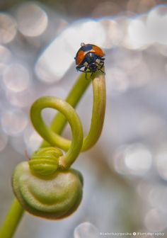 On the top by Nishchay Gauba on 500px