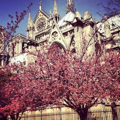 A view of Notre Dame. #ourchoix