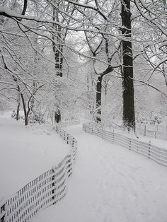Snow,winter