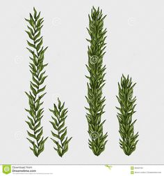 Illustration about Two seaweed, classic underwater grass, vector illustration. Illustration of object, label, bunch - 68422164 Underwater Drawing, Underwater Cartoon, Underwater Plants, Underwater Images, Tattoo Sleeve Themes, Grass Drawing, Certificate Design Template, Sea Plants, Cartoon Fish