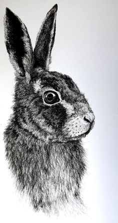 Gossman Illustrations. 'Hazel' A portrait of the a rabbit from the Novel Watership Down