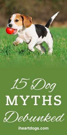 15 Dog Myths Rebunked