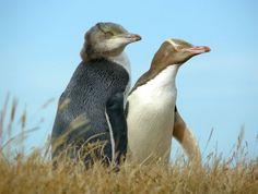 Elm Wildlife Tours Otago Peninsula Dunedin - New Zealand : Elm Wildlife Tours - Otago Peninsula, Dunedin, New Zealand