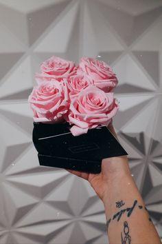 Roses 🌹 Roses, Pink, Rose