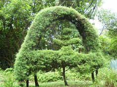 árbol en forma de arco