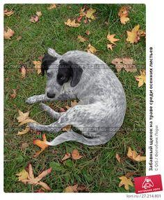 Купить фото «Забавный щенок на траве среди осенних листьев» © DiS / Фотобанк Лори