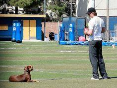 Tom Brady Tom Brady And Gisele, Crazy Dog Lady, Pet Lovers, Tampa Bay, Yorkie, Schedule, Pup, Toms, Basket
