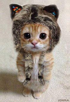 Daniel Boone was a cat, he was a cute cat.